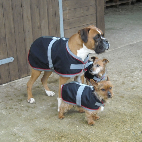 Equiport waterproof dog coat