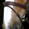 Collection Flash Noseband Bridle B131 Image 2