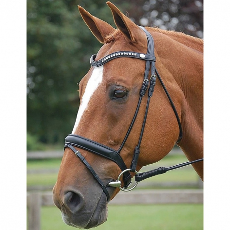 Dyon Dressage Bridle