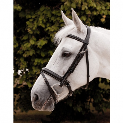Dyon Flash Bridle