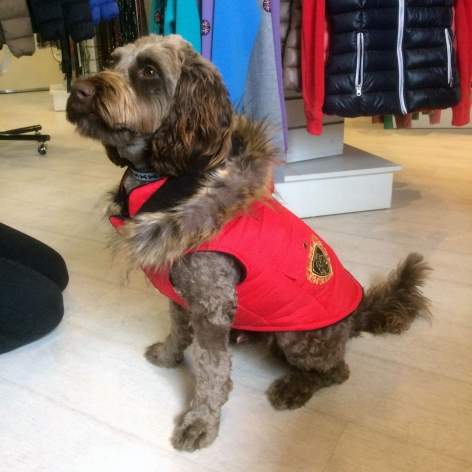 Mark Dog Coat - Red