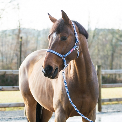 Supreme Arturo Headcollar & Lead Rope