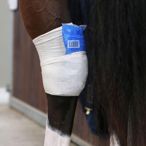Kentucky Tendon Grip