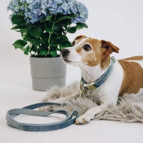 Blue Kentucky Dog Lead