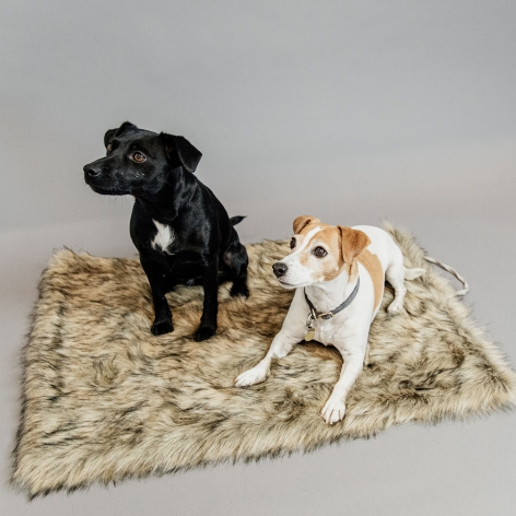 Kentucky Dogwear Dog Blanket