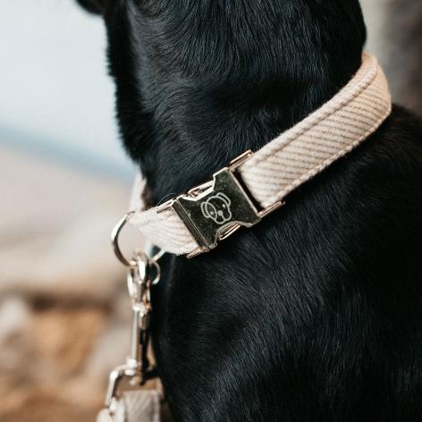 Kentucky Beige Dog Collar