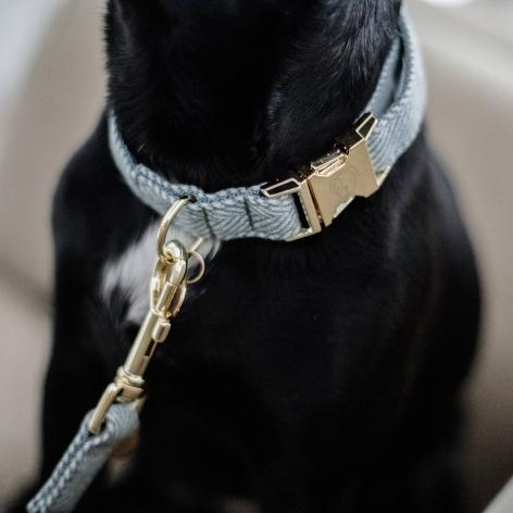 Kentucky Blue Dog Collar