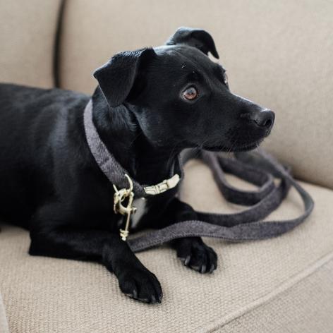 Grey Kentucky Dog Lead