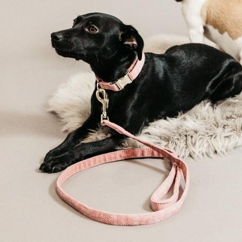 Kentucky Pink Dog Lead