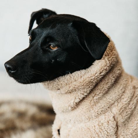 Teddy Fleece Dog Sweater - Beige Image 3