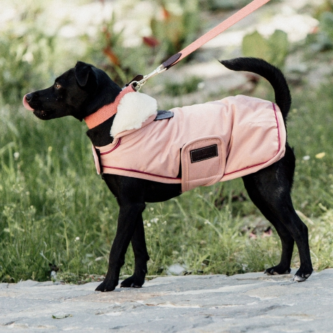Pink Kentucky Dog Coat
