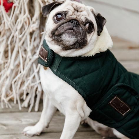 Green Kentucky Dog Coat