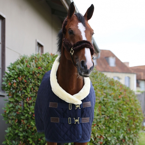 Show Rug - Navy Image 3