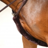 Horse Breastplate Cover