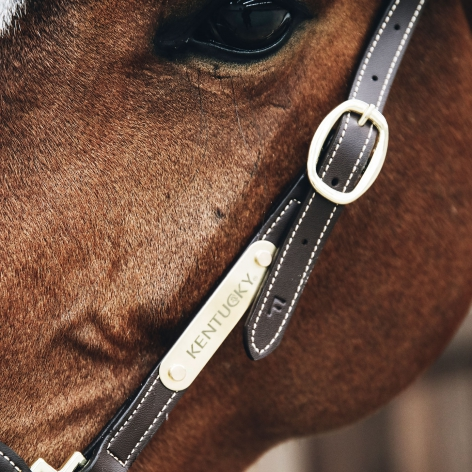 Leather Grooming Halter Image 3