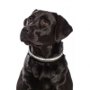 SD Design Arazzo Diamante Dog Collar